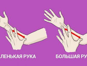 Просто измерь руку — и ты узнаешь всю правду о себе!