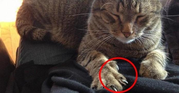Так вот что означает, если кошка топчет тебя передними лапками!