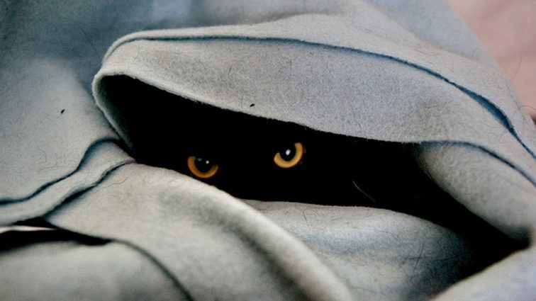 Фото-загадка: Сеть пытается найти на фото котика