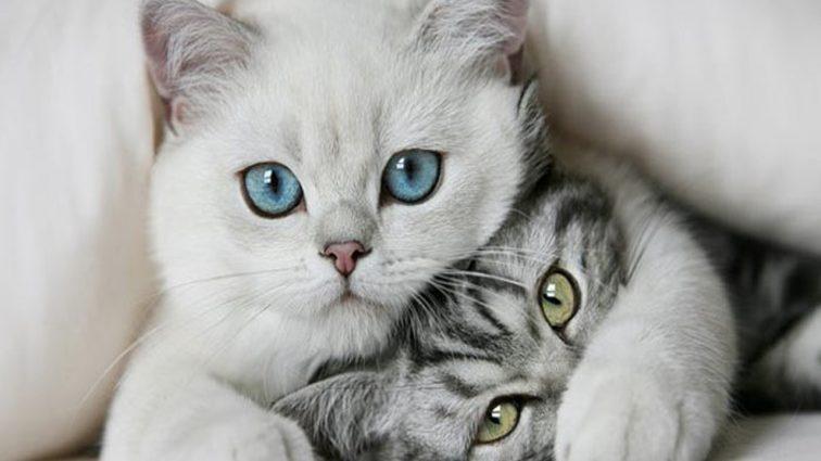 Любителі кішок наражають себе на смертельну небезпеки