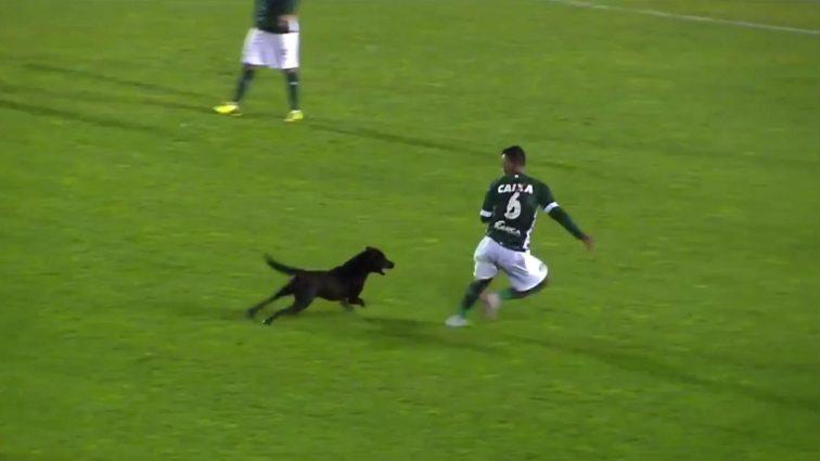 На известного футболиста напала бешеная собака во время матча (видео)