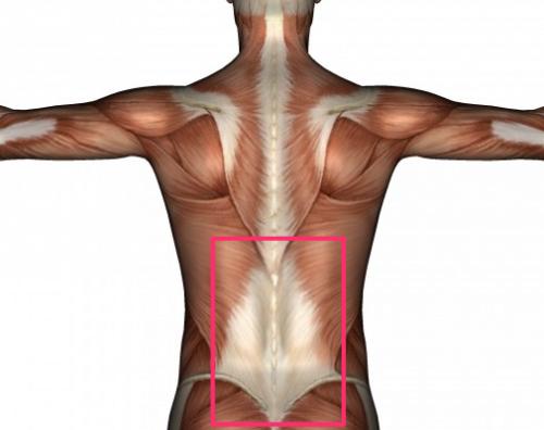 Как люди убивают свои спины в спортзале