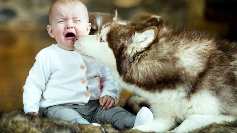 Пес дома защитит не только от вора, но и от этой болезни