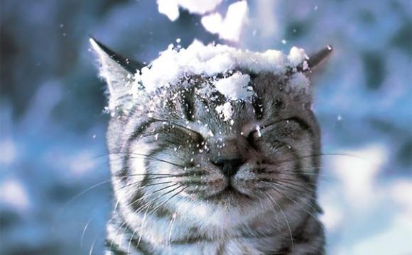 Как это впервые в жизни увидеть снег?