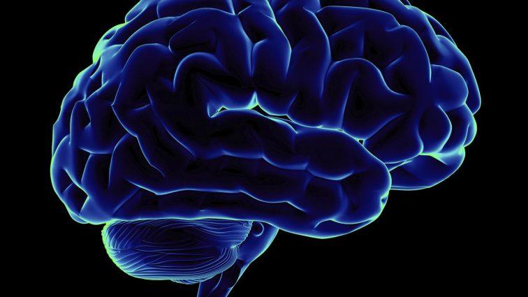 «Не ежьте это!» Какая пища отрицательно сказывается на головном мозге