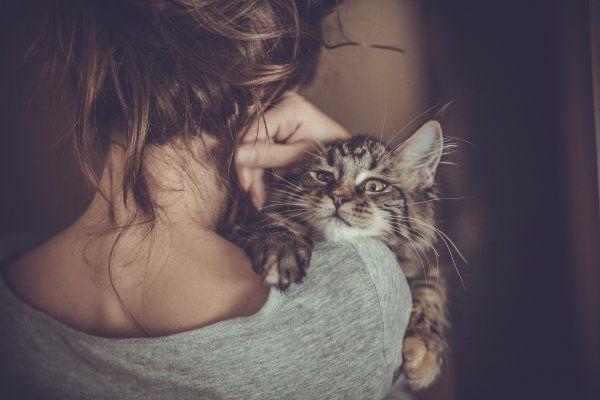Будьте бдительны! Кошки провоцируют ПМС у женщин