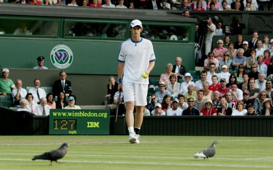 Голубь и оса сорвали теннисные матчи в Британии