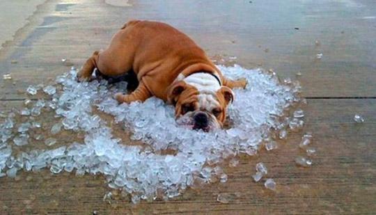 Як охолодитися у спекотну погоду?